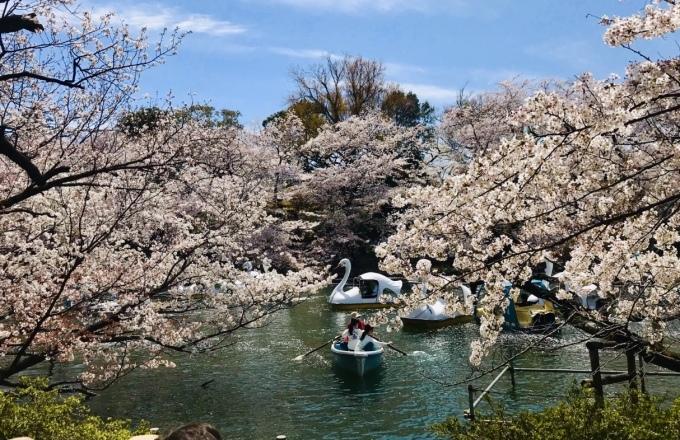【キナさんぽ】春爛漫・井の頭公園_f0115311_22075079.jpeg