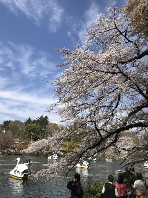 【キナさんぽ】春爛漫・井の頭公園_f0115311_22092469.jpeg