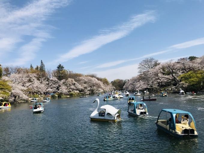 【キナさんぽ】春爛漫・井の頭公園_f0115311_22094973.jpeg