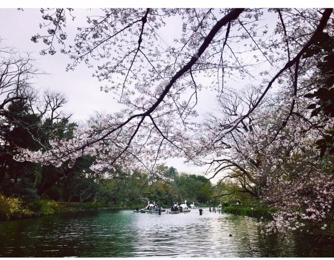 【キナさんぽ】春爛漫・井の頭公園_f0115311_23510034.jpeg