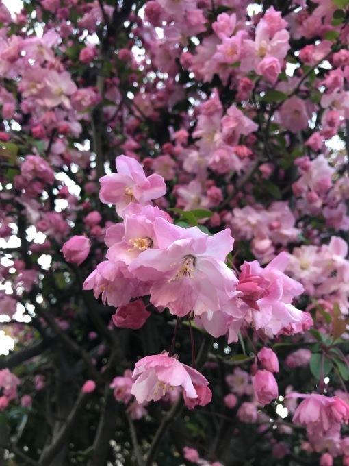 【キナさんぽ】春爛漫・井の頭公園_f0115311_23540468.jpeg
