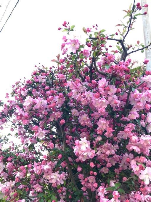 【キナさんぽ】春爛漫・井の頭公園_f0115311_23560559.jpeg