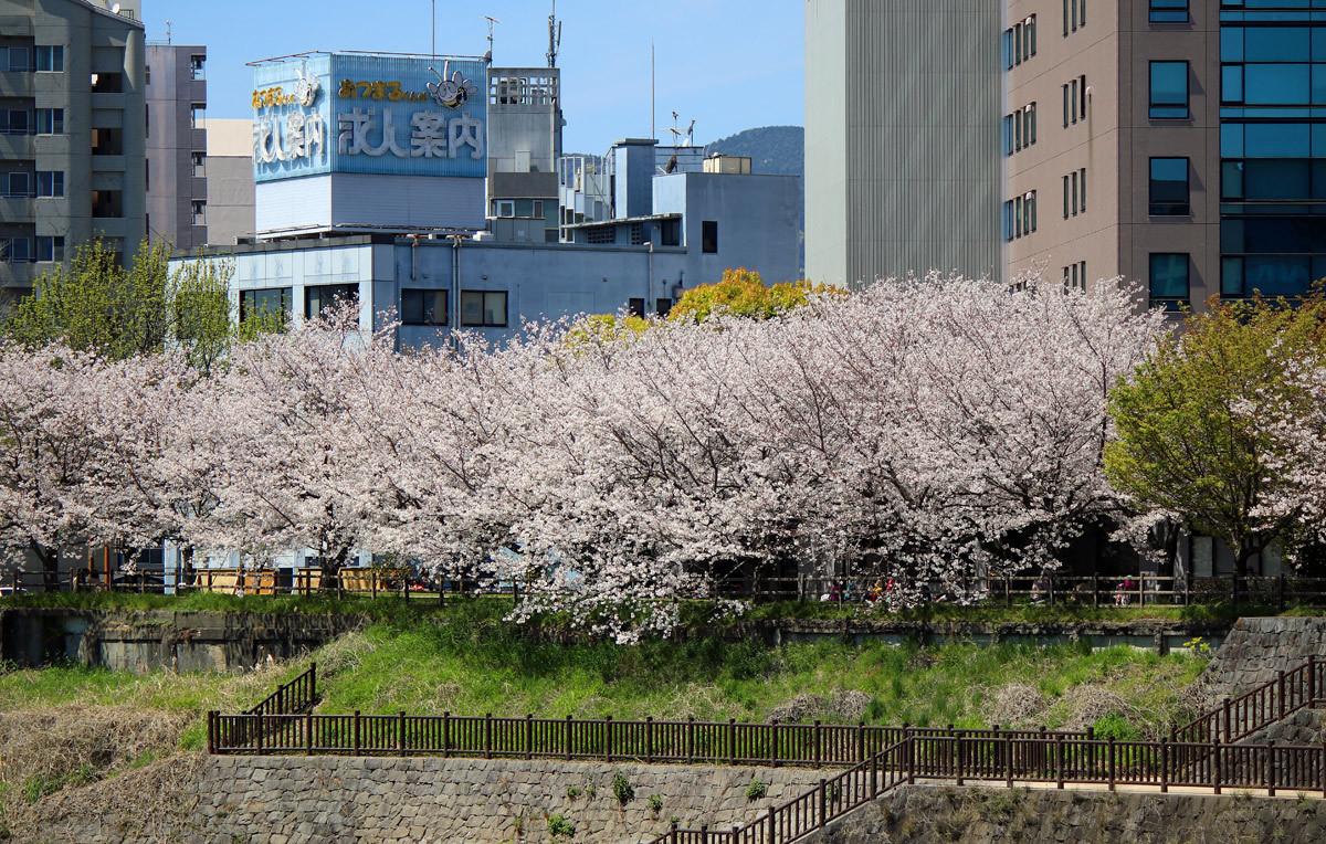 近くの桜。。。_b0044115_08472604.jpg