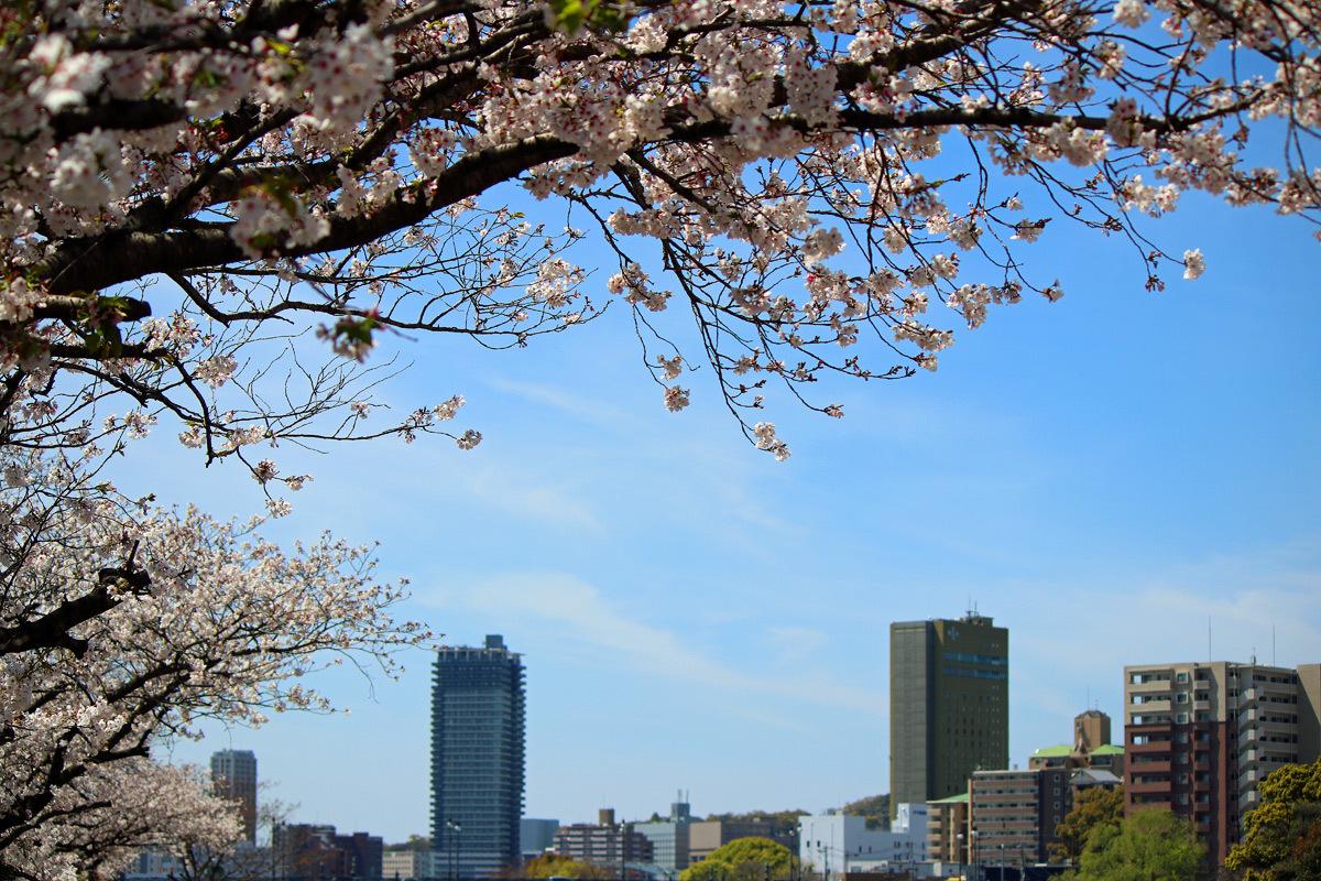 近くの桜。。。_b0044115_08474493.jpg