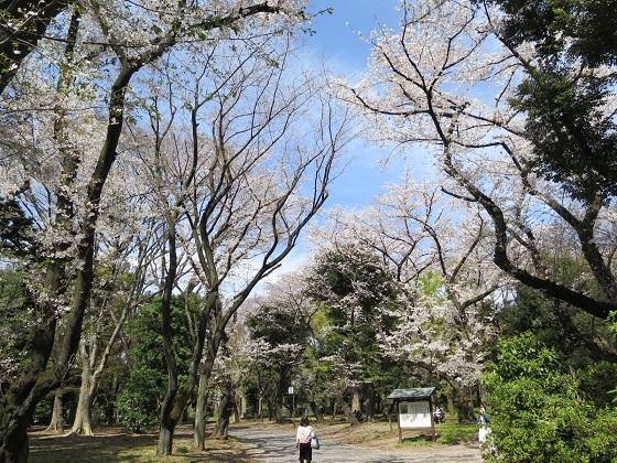 春の風景@神宮外苑_c0192215_17362339.jpg