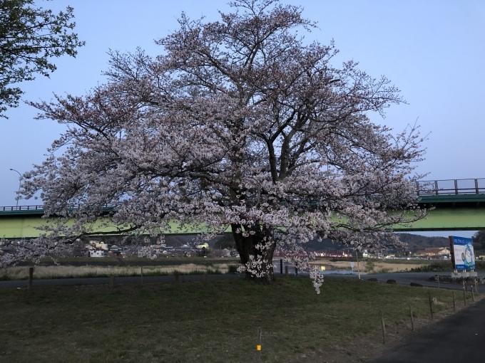 桜🌸_d0155416_09041100.jpeg