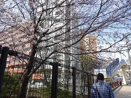 日曜の昼下がり、天現寺交差点からケンジ君のお店へ_f0097523_14283620.jpg