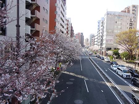 日曜の昼下がり、天現寺交差点からケンジ君のお店へ_f0097523_14284249.jpg