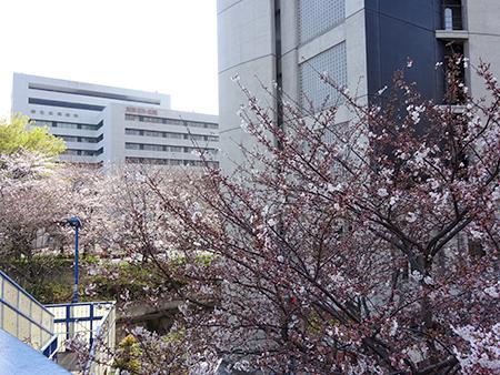 日曜の昼下がり、天現寺交差点からケンジ君のお店へ_f0097523_14284508.jpg