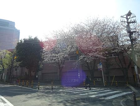 日曜の昼下がり、天現寺交差点からケンジ君のお店へ_f0097523_14291508.jpg
