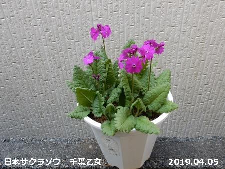 e0033229_1826318.jpg