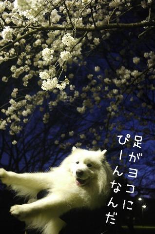 SUIGEI_c0062832_16154915.jpg