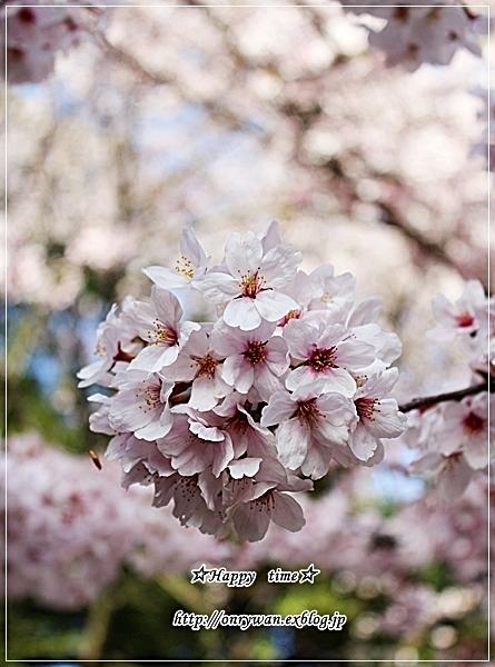 菜の花散らし寿司弁当とシングルオリジンチョコ♪_f0348032_18090551.jpg