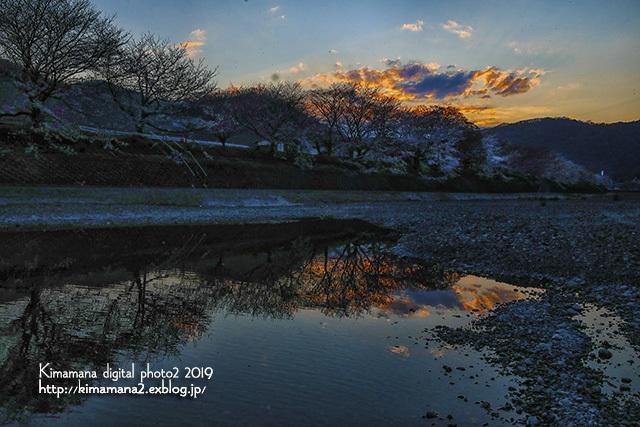 井原堤の桜_f0324756_12253751.jpg