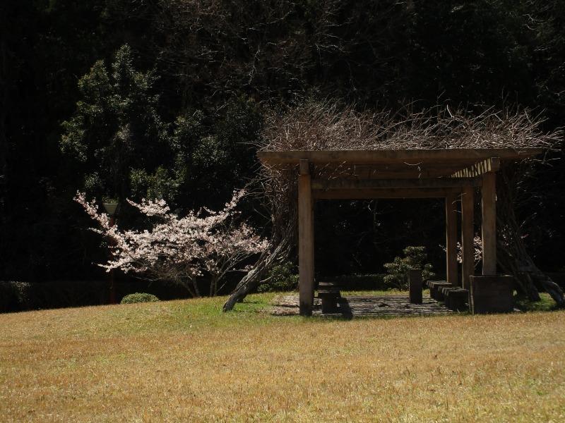 日常「花見日和」_b0362459_19463969.jpg