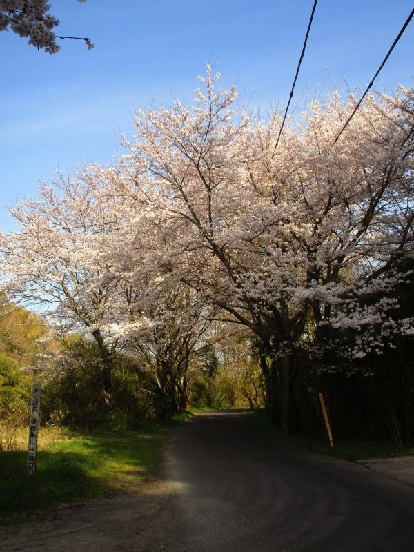 日常「花見日和」_b0362459_20030374.jpg