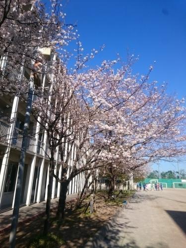 春らしく・・・(4/6)_c0200361_14573058.jpg