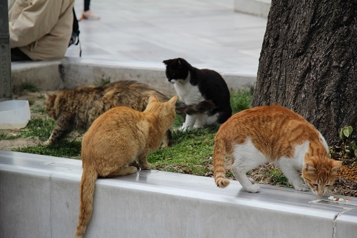 Kedi seyahat イスタンブールの旅 6_e0061785_06432683.jpg