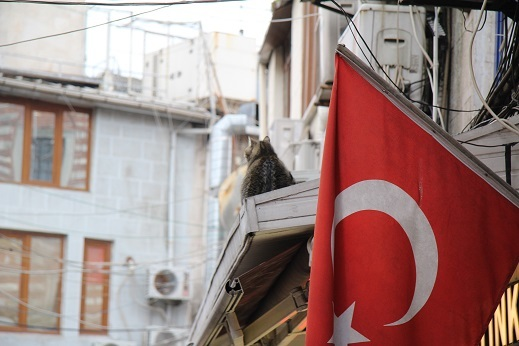 Kedi seyahat イスタンブールの旅 6_e0061785_06433938.jpg