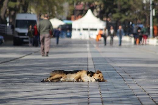 Kedi seyahat イスタンブールの旅 8_e0061785_07193443.jpg