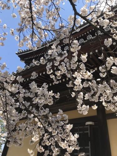 南禅寺の桜_f0018889_11383451.jpeg