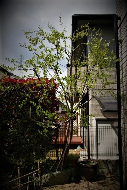 4月上旬の庭_f0229190_13331861.jpg