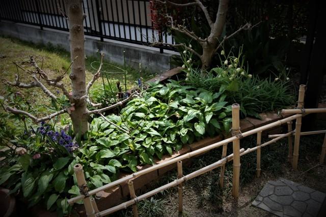 4月上旬の庭_f0229190_14194001.jpg