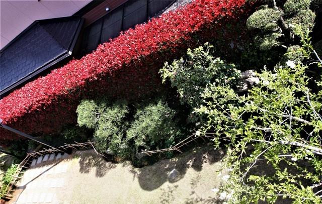 4月上旬の庭_f0229190_15054539.jpg