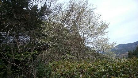 花びら風に_c0161301_00203823.jpg