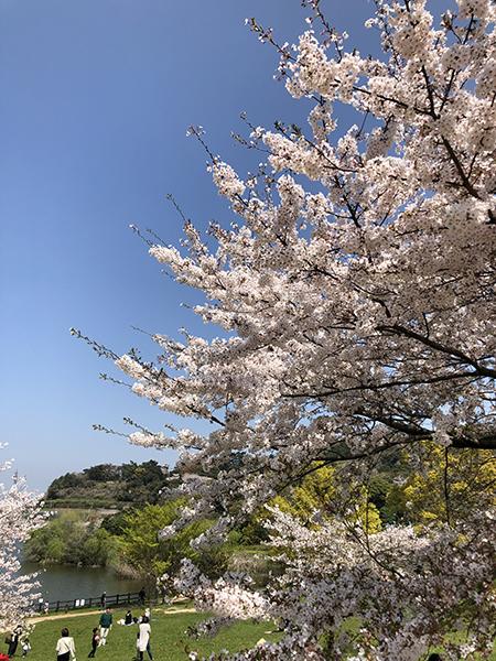 桜_d0321904_15063757.jpg