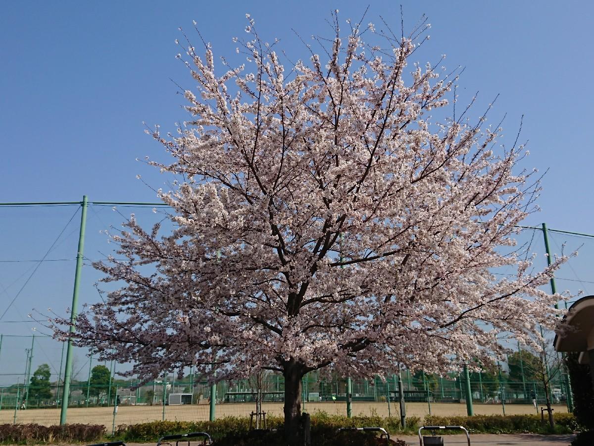 4/6  東京の桜2019 @都立武蔵野の森公園_b0042308_10481110.jpg