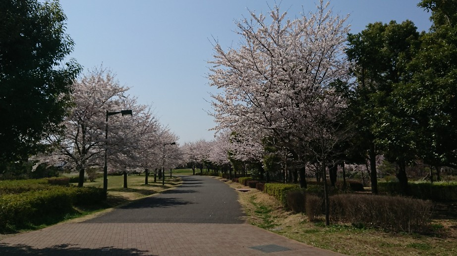 4/6  東京の桜2019 @都立武蔵野の森公園_b0042308_10481247.jpg