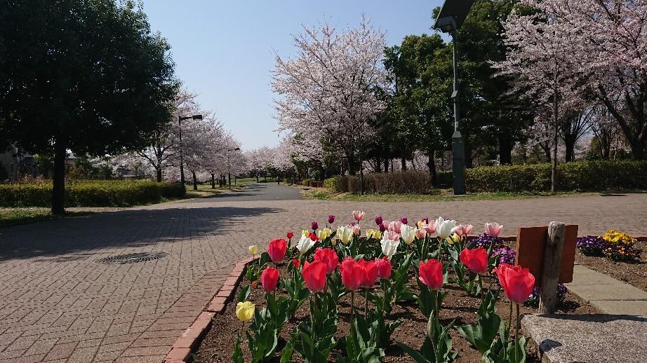 4/6  東京の桜2019 @都立武蔵野の森公園_b0042308_10510749.jpg