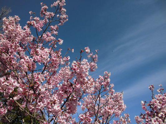 4/5 桜_a0154110_11241836.jpg