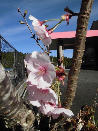 4/5 桜_a0154110_11245473.jpg