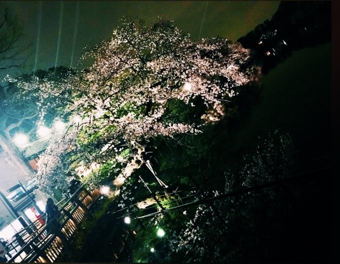 【キナさんぽ】春爛漫・井の頭公園_f0115311_00094331.jpeg