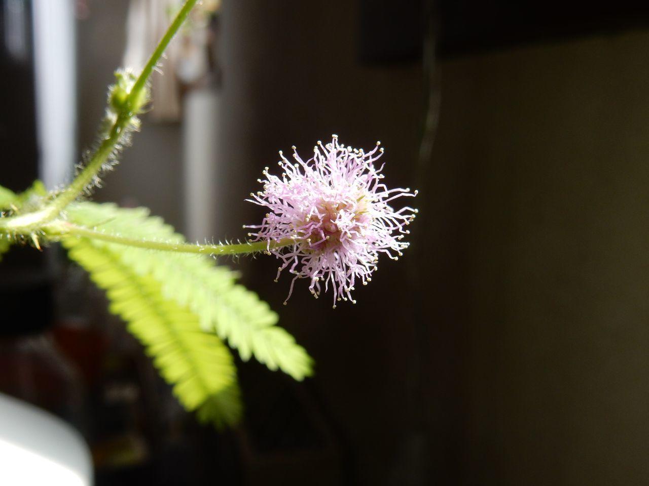 札幌の春_c0025115_22300254.jpg
