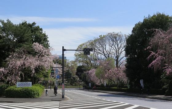 春の風景@神宮外苑_c0192215_16163439.jpg