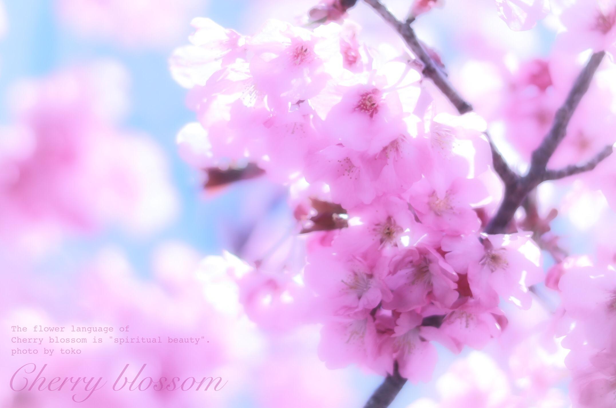 去年の桜_e0390421_00154689.jpeg