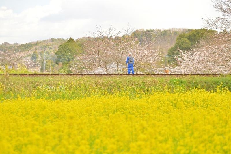春の里山をゆく〜_f0321522_12373108.jpg