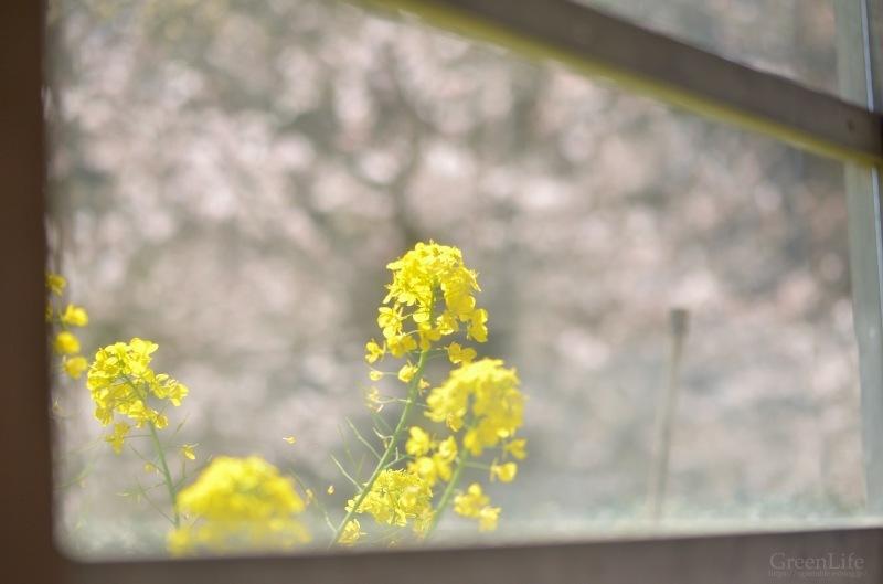 春の里山をゆく〜_f0321522_12374364.jpg
