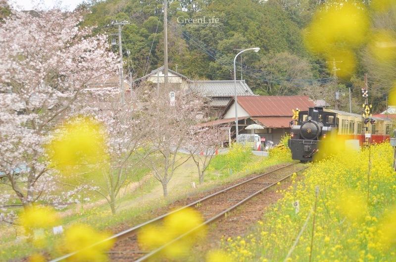 春の里山をゆく〜_f0321522_12375673.jpg
