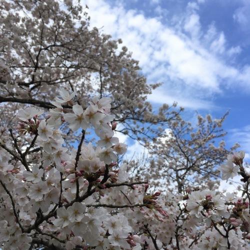 2019.4.13(土)江東区「ビルトインガレージのあるコートハウス」完成見学会_f0170331_00141443.jpg