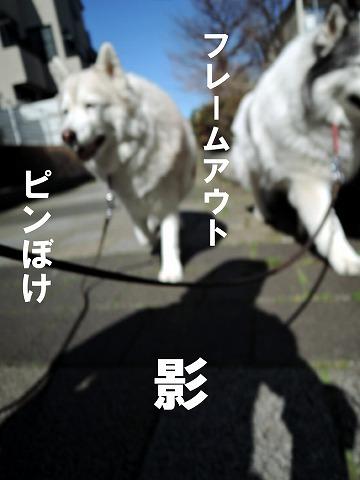 リアルお花見散歩♪_c0062832_15501095.jpg