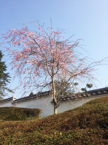 お花見日和_f0045132_13044932.jpg