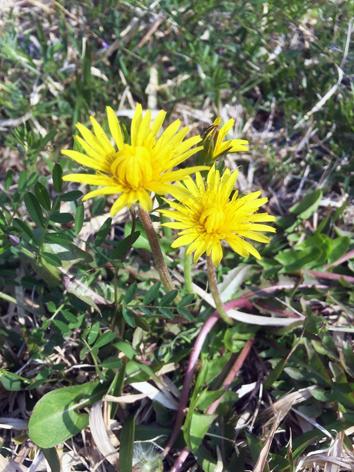お花見日和_f0045132_13045477.jpg