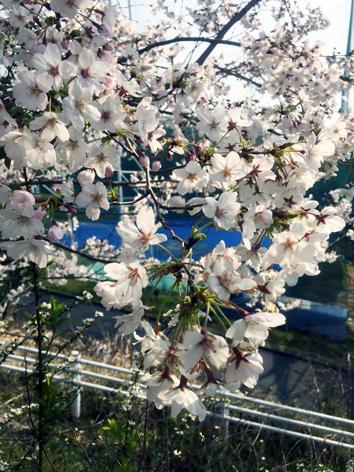 お花見日和_f0045132_13050048.jpg