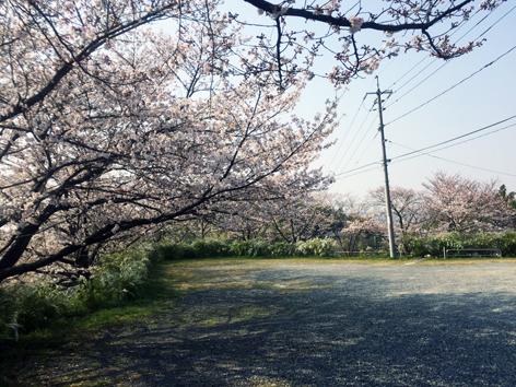 お花見日和_f0045132_13050546.jpg