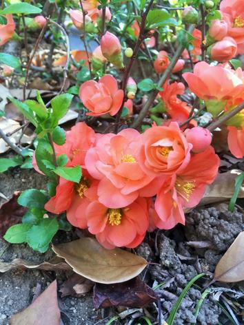 お花見日和_f0045132_13051763.jpg
