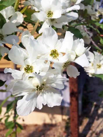 お花見日和_f0045132_13052228.jpg